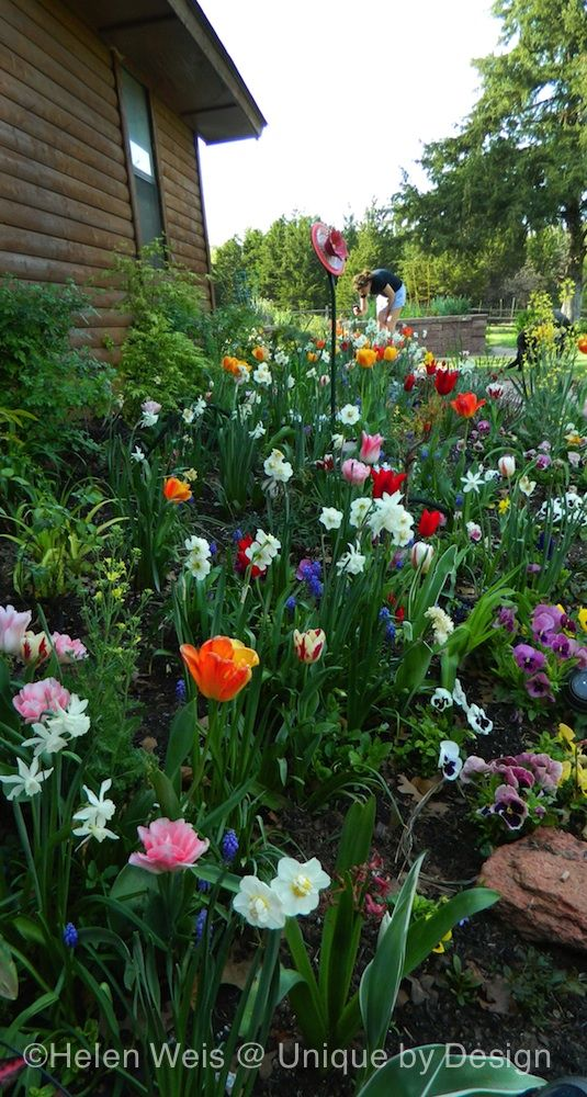 The 149 best spring bulbs images on Pinterest | Spring bulbs, Tulip ...
