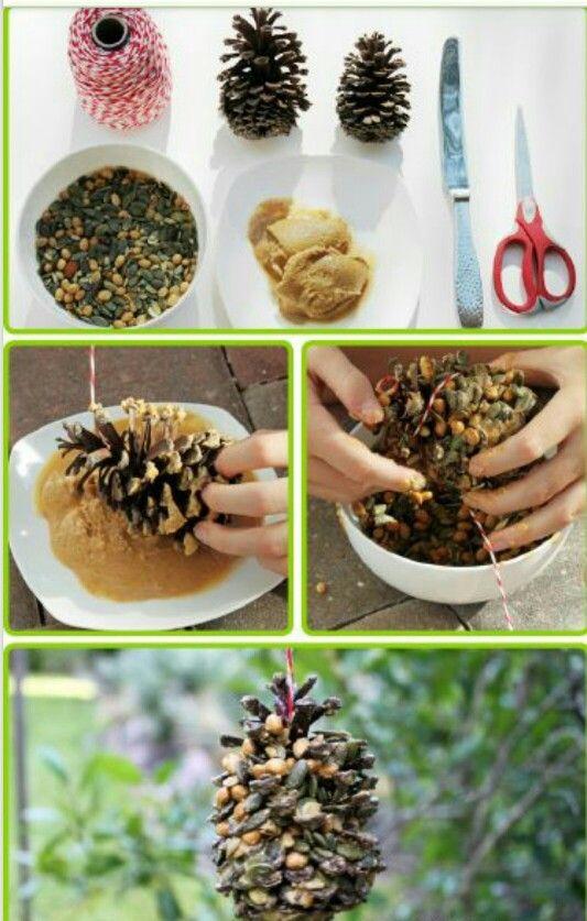 Bird seed pinecones