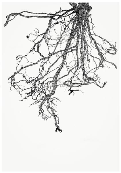 Roots by Claire Scully