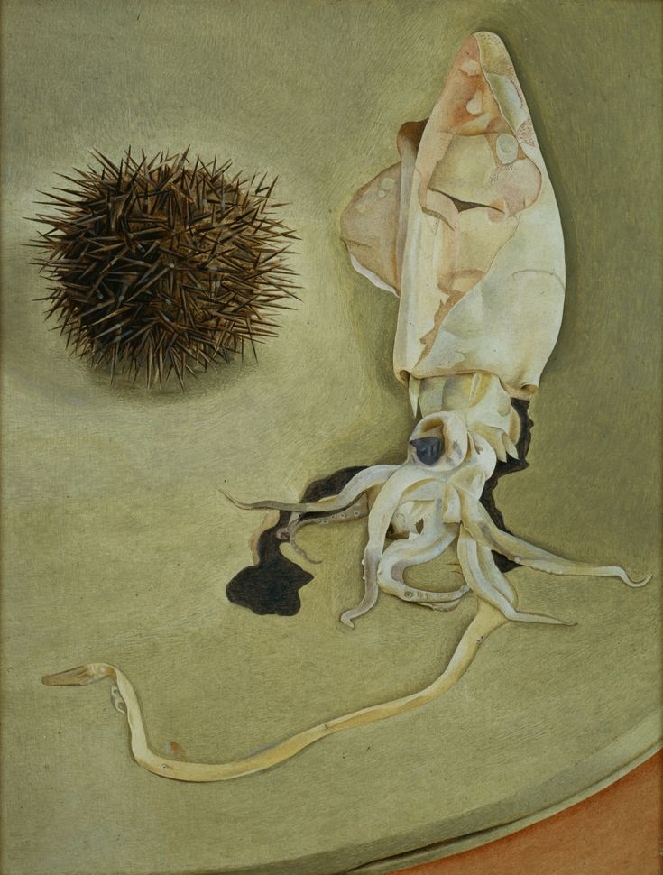 Lucian Freud, Still Life with Squid and Sea Urchin, 1949, Courtesy Harris Museum & Art Gallery, Preston. Aquatopia Nottingham Contemporary