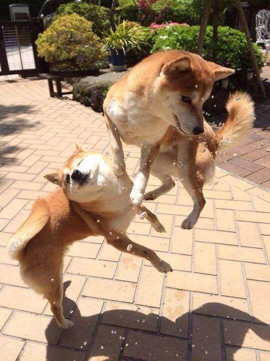 Awesome in the air Doge battle