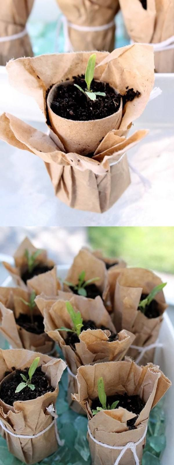 Brown Paper Seedling Pot