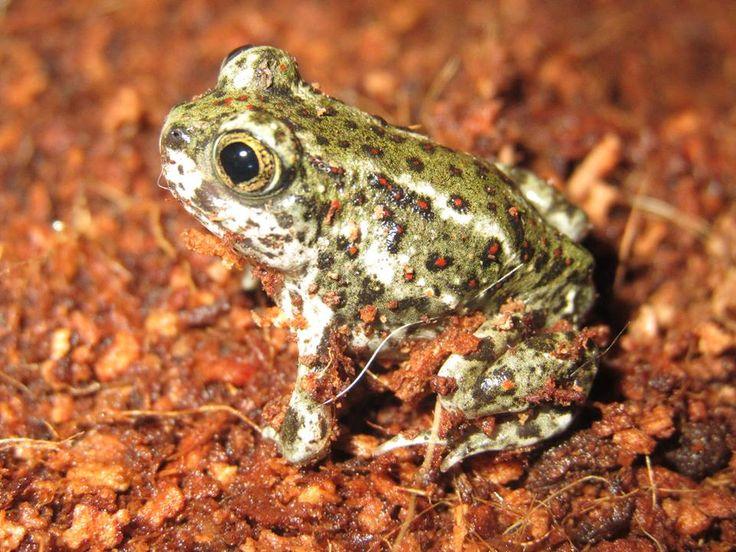 Frog O Sphere Brookstone 794 best frog i...