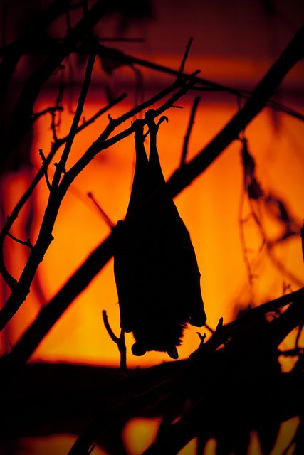"""TheDanseMacabre — """"Twinkle, twinkle little bat. How I wonder what..."""