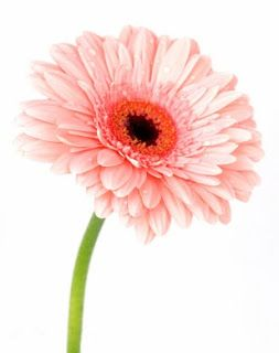 Guide des fleurs pour votre decoration ou votre bouquet de mariee