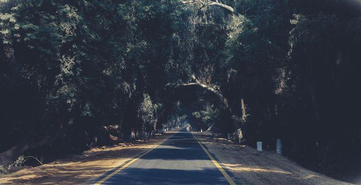 Photo of Asphalt Road Between Trees  Free Stock Photo
