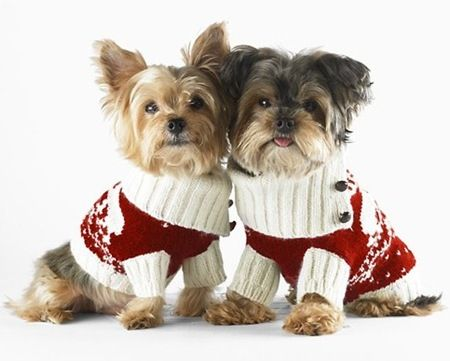 Christmas yorkies. When I get my yorkie she will wear this