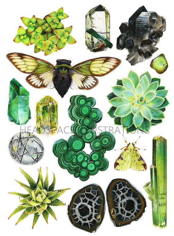 green crystal quartz succulent moth and cicada botanical art print by headspace find this pin and more on wall