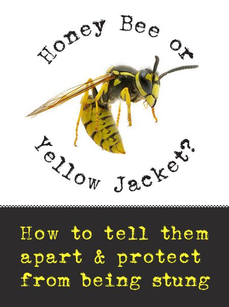 How to Identify Yellow Jackets and Protect from Being Stung Teachers-teach kids to know the difference! Don't bother the bee, the bee WON'T bother you!