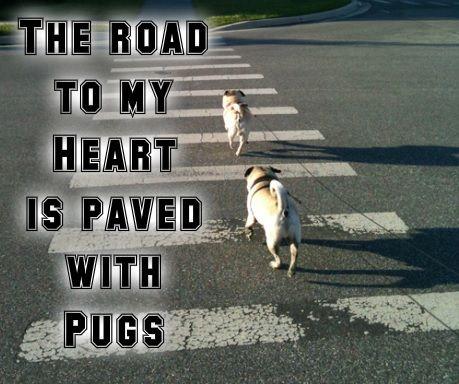 Pug Love