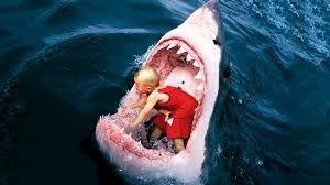 Resultado de imagen para imagenes de tiburones