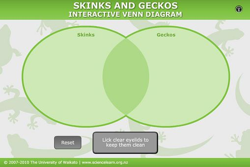 Student Activity - Similarities and differences: skinks and geckos. In this activity, students use an interactive or paper-based Venn diagram to illustrate the key similarities and differences between skinks and geckos.
