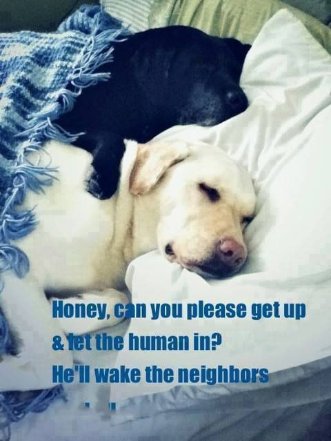 Good Morning Happy Saturday. | Animal Humor | Pinterest ... Saturday Dog