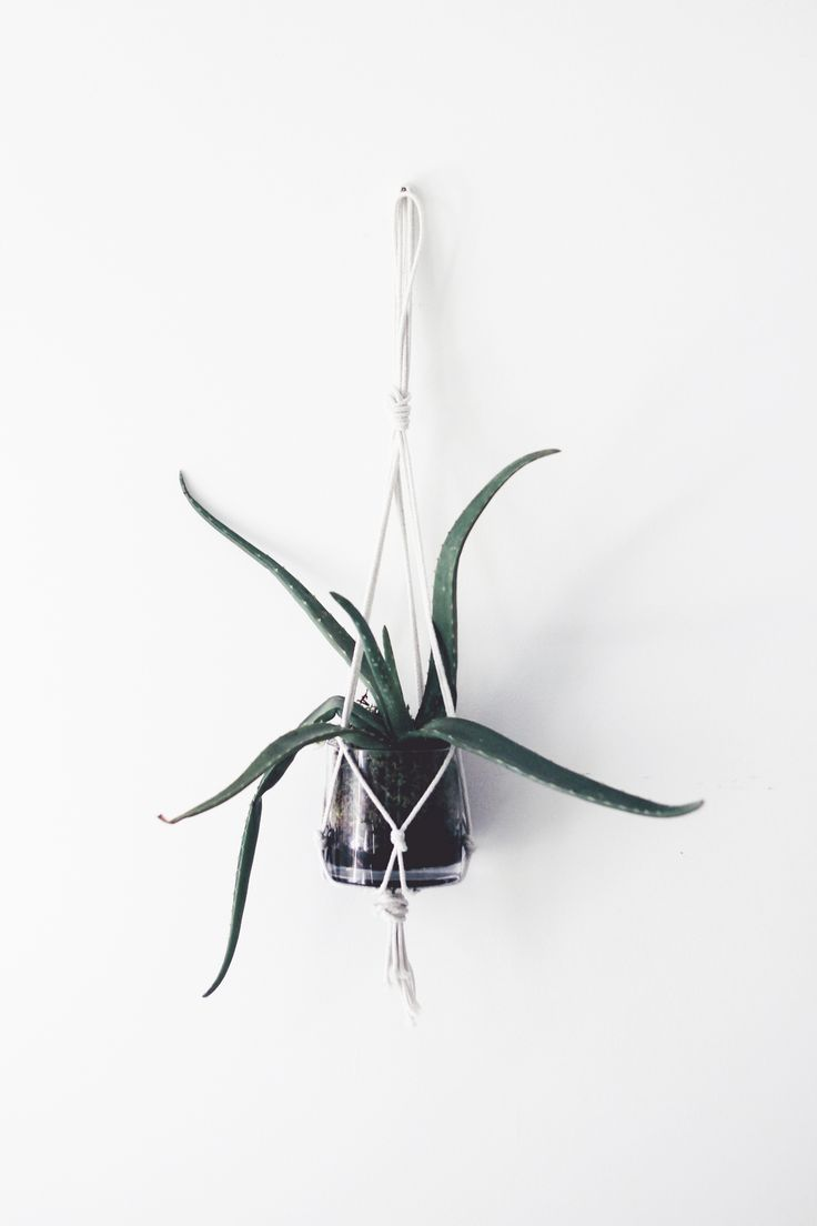 Simple macrame plant hanger