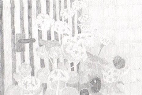 本日の一枚。2017/4/19今日はスケッチです。ゼラニウムの鉢植え。