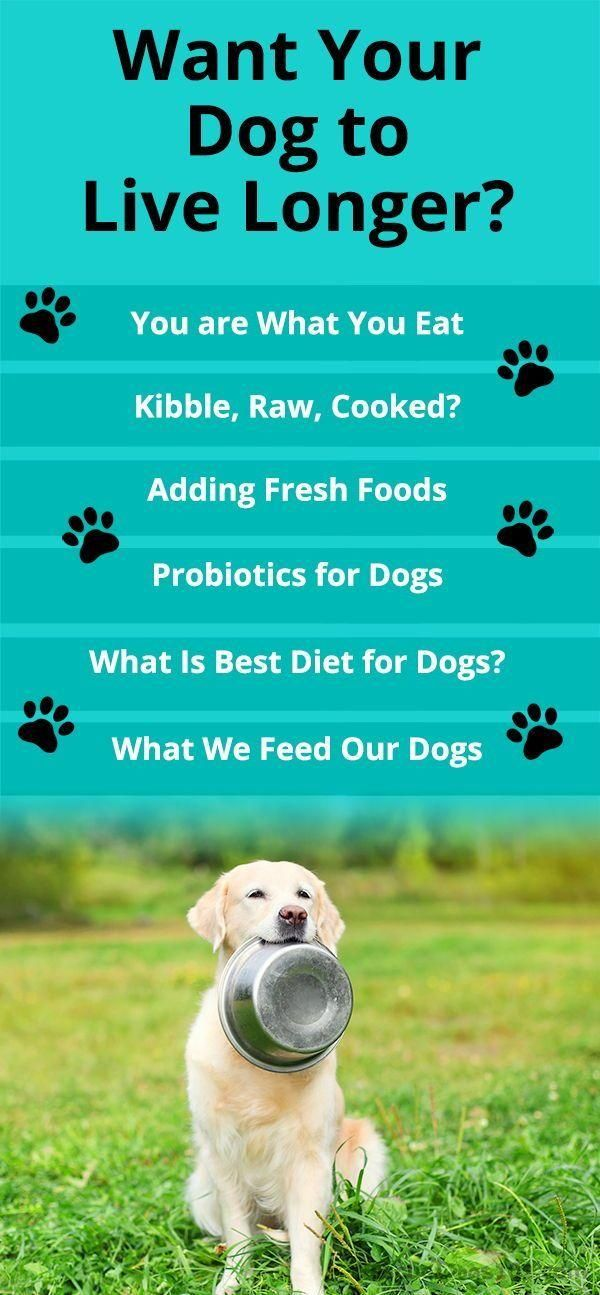 What Should I Feed My Dog Dog Care In 2020 Best Diet For Dogs