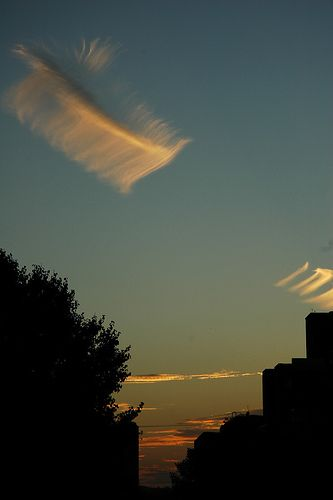Vertebra cirrus clouds at Knoxville, Tennessee, USA