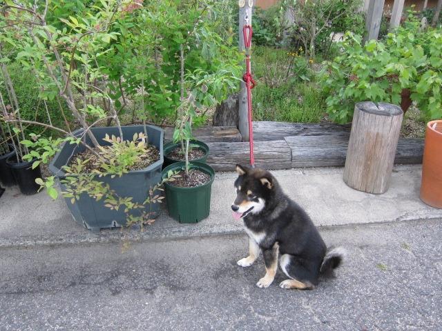 愛犬のお散歩中にも立ち寄っていただけるようにリードフックを設けています http://berryslife.com