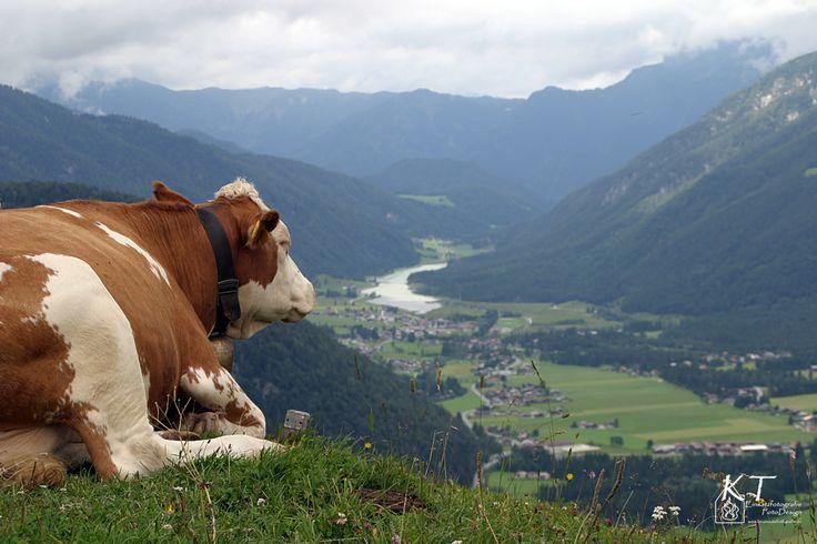 Blick ins Pillerseetal.... Entspannt urlauben beim Hotel Tiroler Adler! http://www.tiroler-adler.at/
