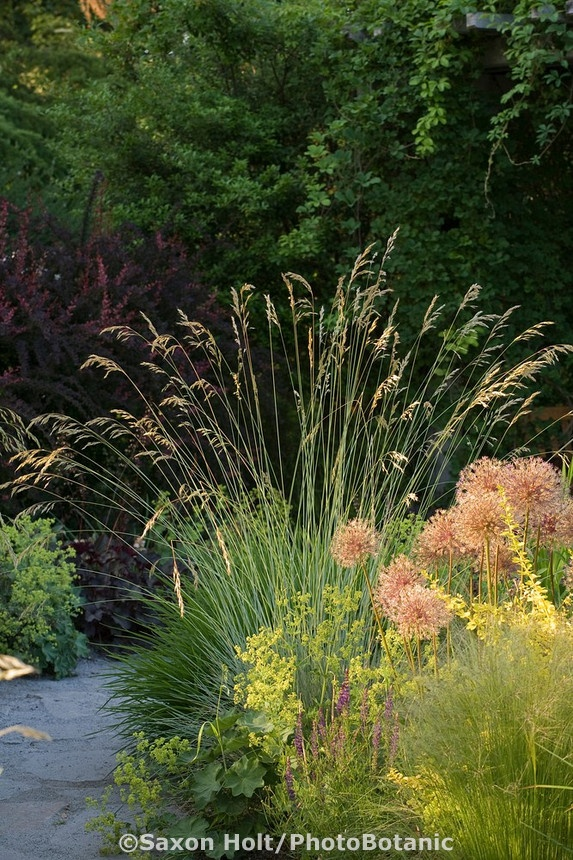 187 best images about ornamental grasses on pinterest for Tall grass border