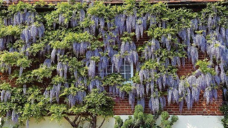Krásna kamufláž: Popínavé rastliny zamaskujú škaredý plot i pohľady susedov