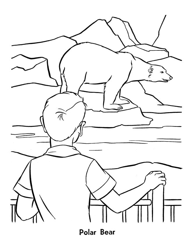 zoo animal coloring page polar bears exhibit