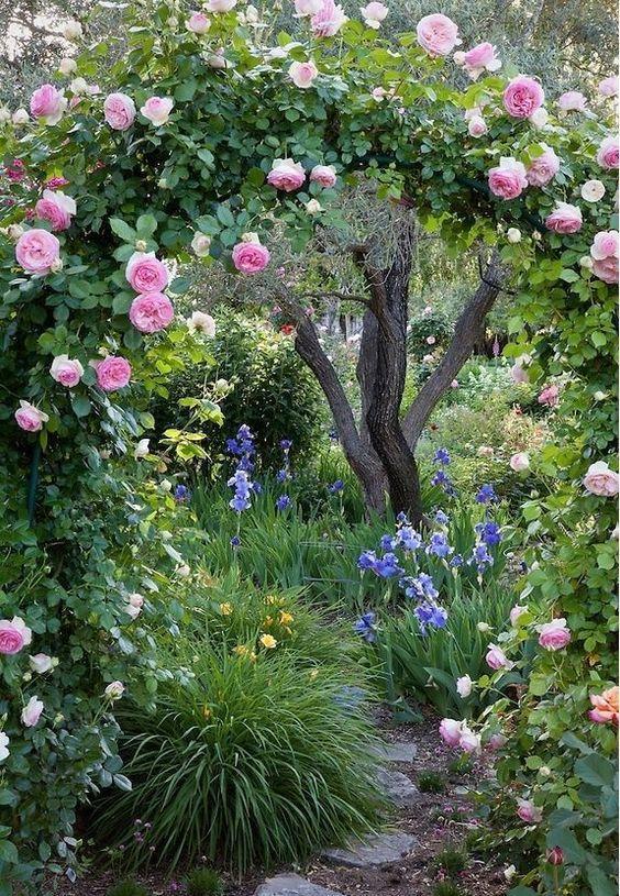 giardino in stile cottage rosa antica