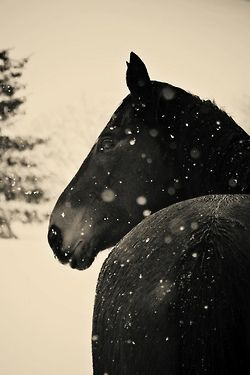 Horse sense is the thing a horse has which keeps it from betting on people ~ WC Fields