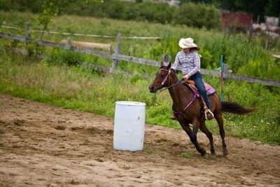 Good tips, build up your driving/jumping minis muscles! - How to Build Up the Hindquarters of a Horse
