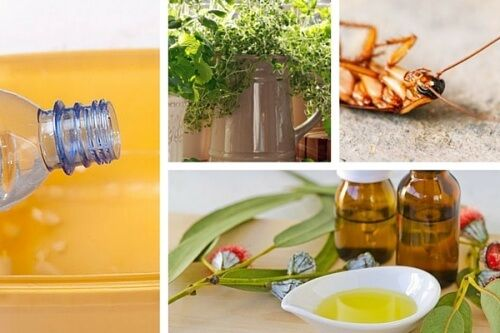 Existem diferentes tipos de ervas, que além de repelir insetos trarão um cheiro delicioso para sua casa. Experimente!
