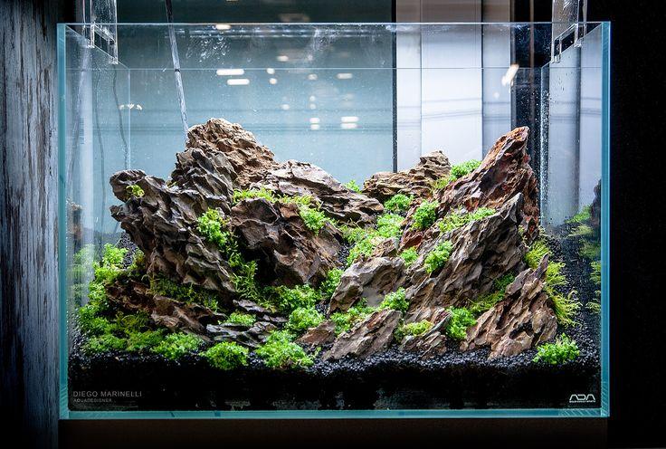 layout nature aquarium - Diego Marinelli