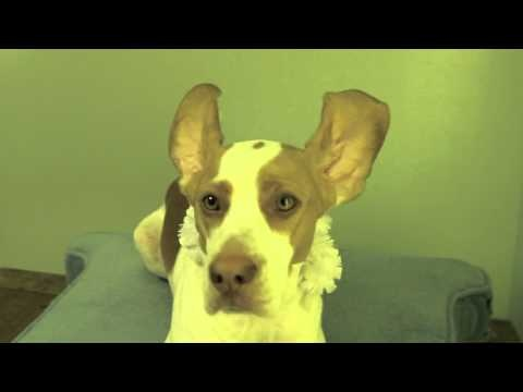 Dog morphs into bunny in the name of dubstep. Shameful and cute as hell.