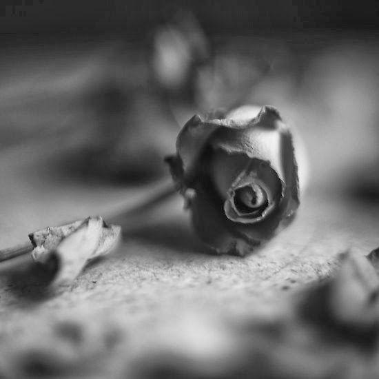 nAnonima: Yura Kurnosov (Deitar-me para sonhar não é apena...