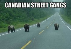 canadian memes - Google Search