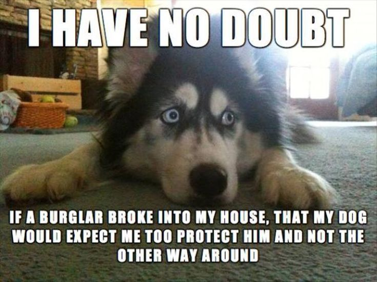 Funny Animal Pictures Of The Day 22 Pics