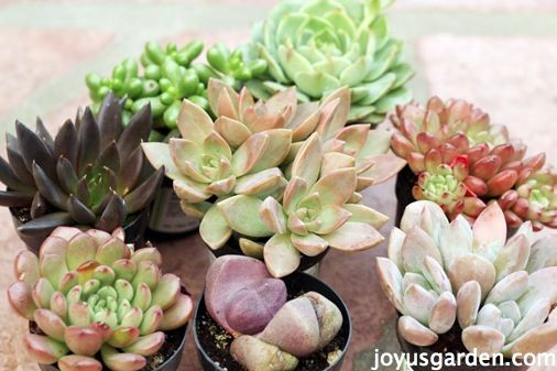 Succulents are easy to work with. Get my best tips for planting these fascinating plants. And, be sure to check out the 2 videos that are in this post.
