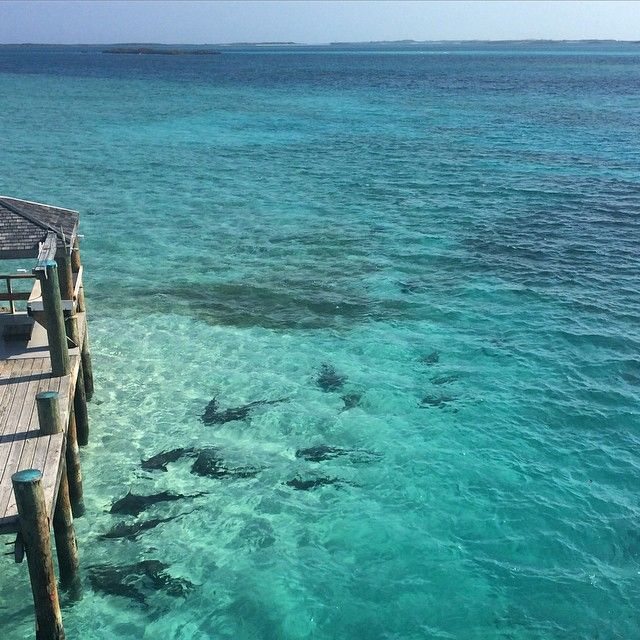 Don't get too close to the edge! Nurse Sharks waiting - amazing sight to see. #highburncay #bahamas #stateofescape