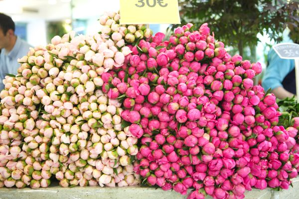 peonies just waiting to be bought at a market