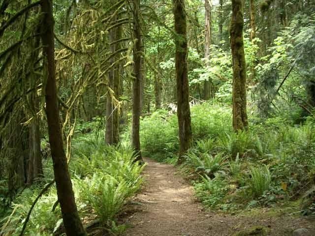 Upper Goldstream Park Trail