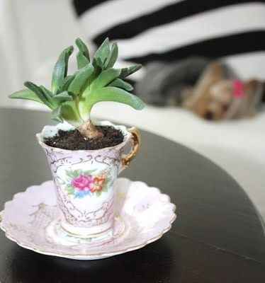 teacup planter: Vintage Teacups, Goodies, Succulent, Idea, Houses, Teas Cups, Cups Planters, Weightloss, Weights Loss