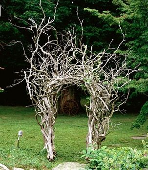 curly willow or grapevine