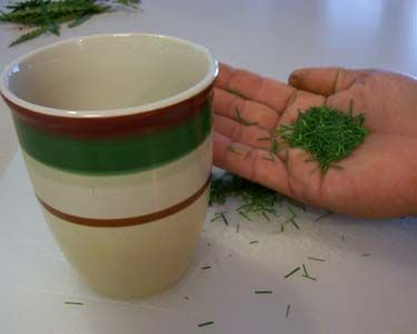 Pine needle tea - contains 4-5 times the Vitamin C of fresh-squeezed orange juice, and is high in Vitamin A! An expectorant, decongestant, and antiseptic wash!