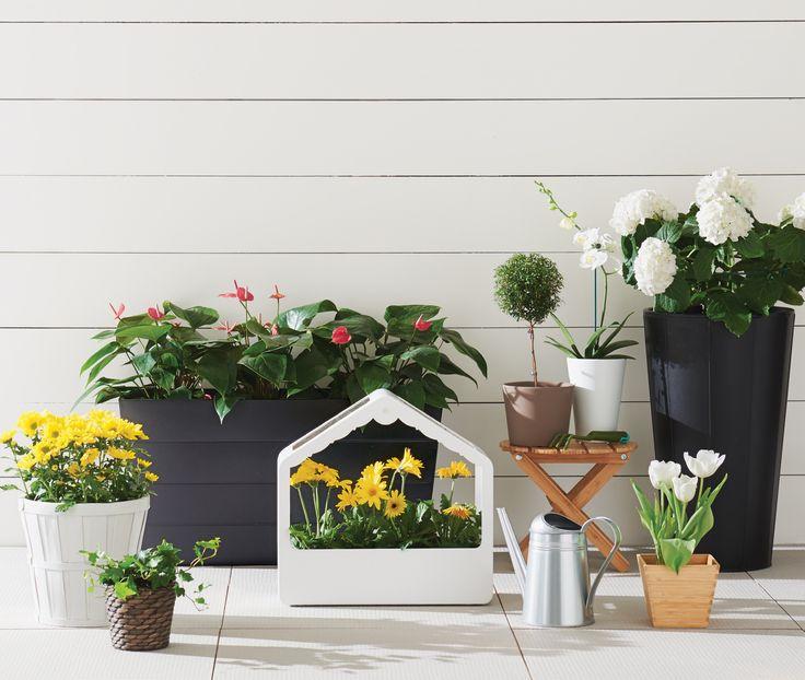 Ce printemps, faites pousser vos plantes et vos fleurs vous-même et récoltez des économies florissantes!