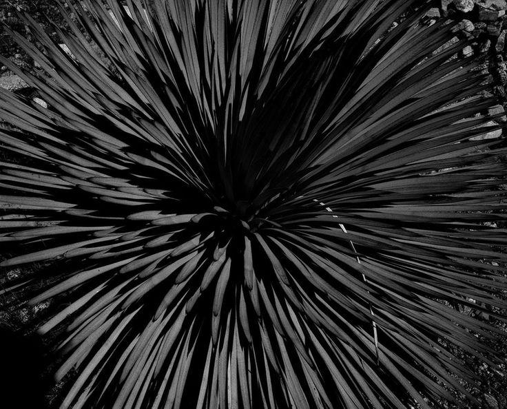 <em>Untitled (Plant)</em>, 2013