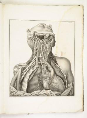 Scarpa, A., Tabulae neurologicae (1794). TN03 Tabula 3. Cardiaci nervi dexteri lateris — Portale biblioteche Medicina.
