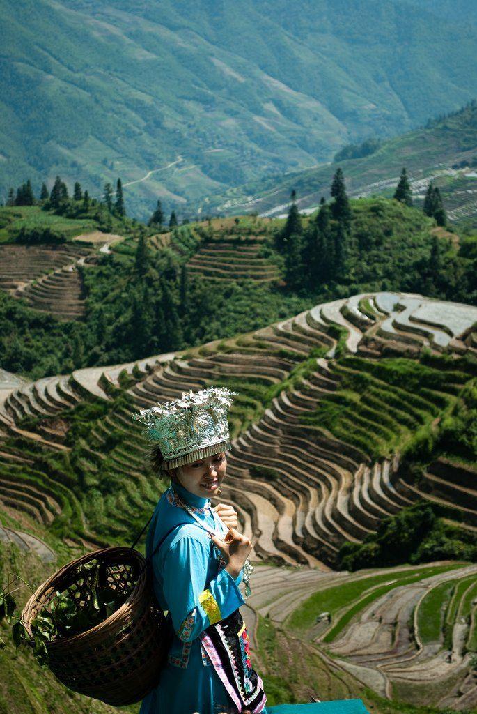 superbes rizieres en terrasse de longsheng 2   Les superbes rizières en terrasse de Longsheng   terrasse riziere riz photo Longsheng image c...