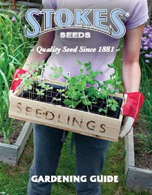 Vegetable seed catalogs and other garden seed catalogs