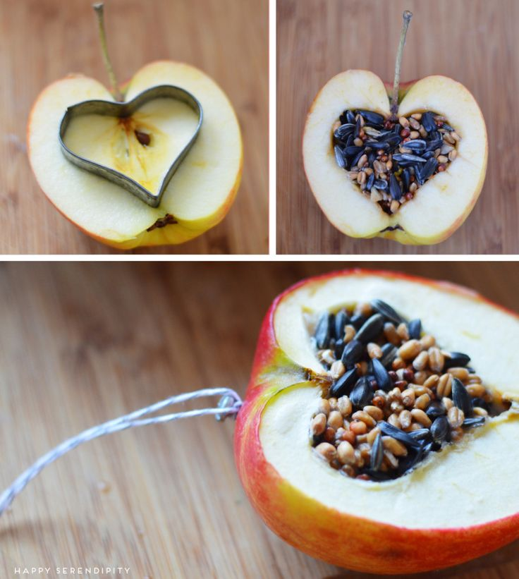 Apples and Birdseed - Prepare the apple with seed as shown. Melt coconut oil and spoon over the seed. When oil solidifies, the seed will stay in the apple so you can hang it.