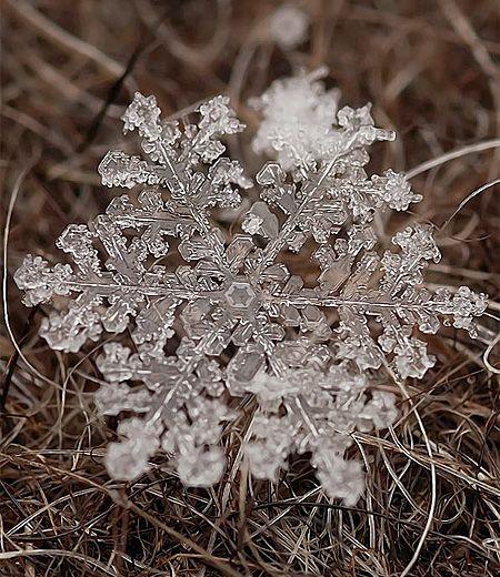 雪の結晶 画像17