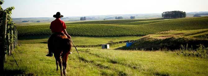Campanha Serra do Sudeste Wine Brasil